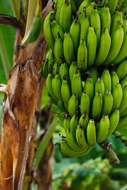 Galleria foto - Banane proprietà Foto 3