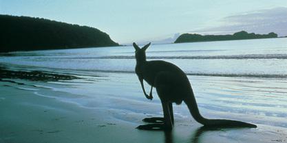 Viaggio di nozze a Kangaroo Island