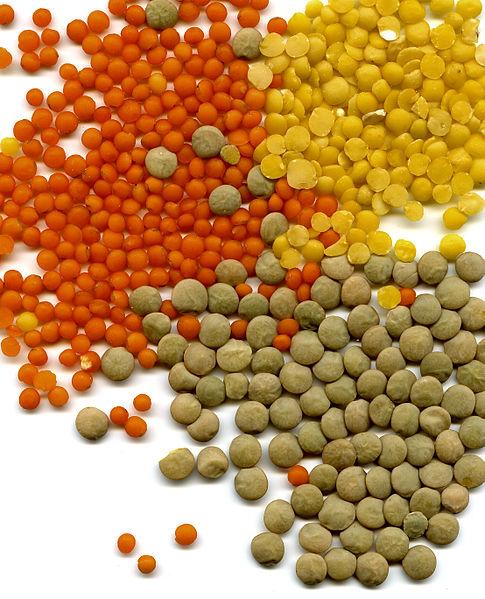 varieta-lenticchie