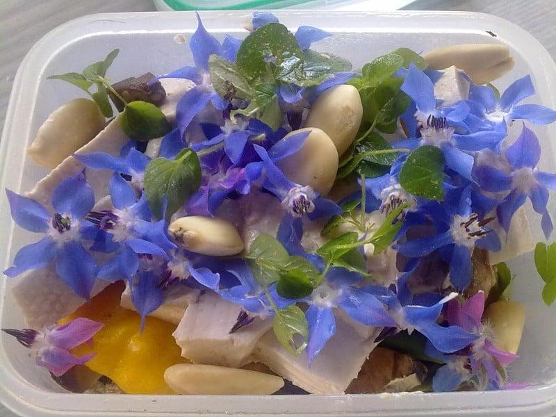 fiori di boraggine