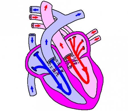 cuore.30.jpg