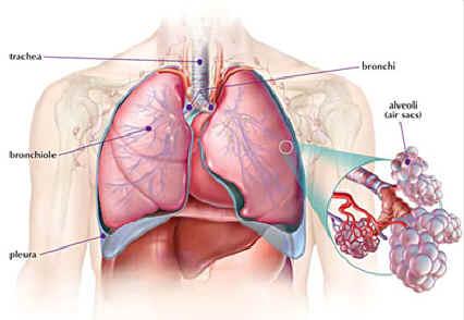 Ipertensione polmonare, patologia a prevalenza femminile