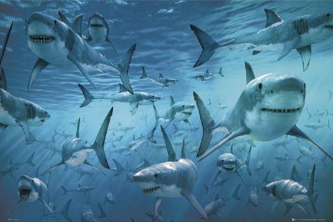 Nozze in piscina con gli squali