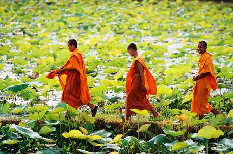 TISANA MONACI BUDDISTI