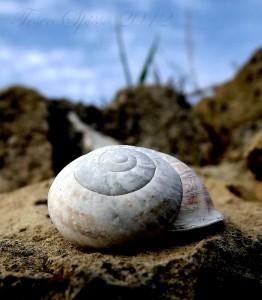 Galleria foto - La bava di lumaca: un valido aiuto alla nostra pelle dalla natura Foto 6