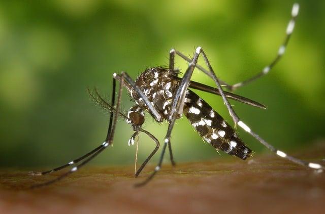 Galleria foto - Zika Virus Foto 2