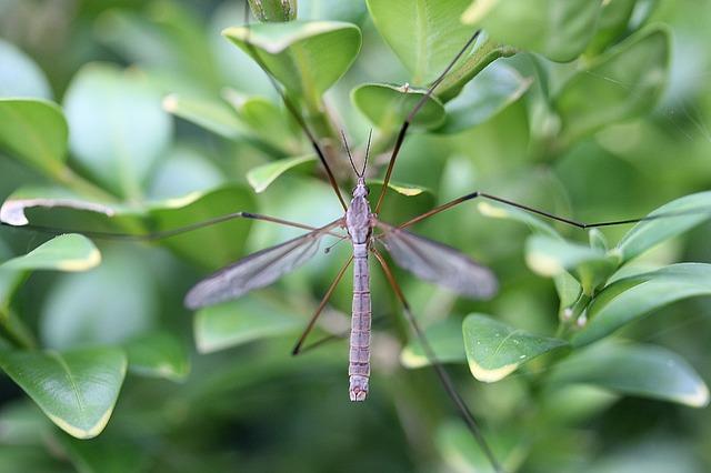 Zanzare: rimedi naturali