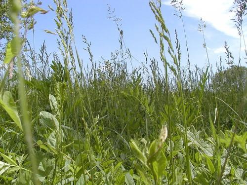 Integratori e medicinali a base di erbe fanno male?