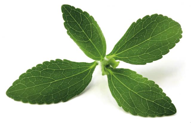 Stevia: proprietà e controindicazioni