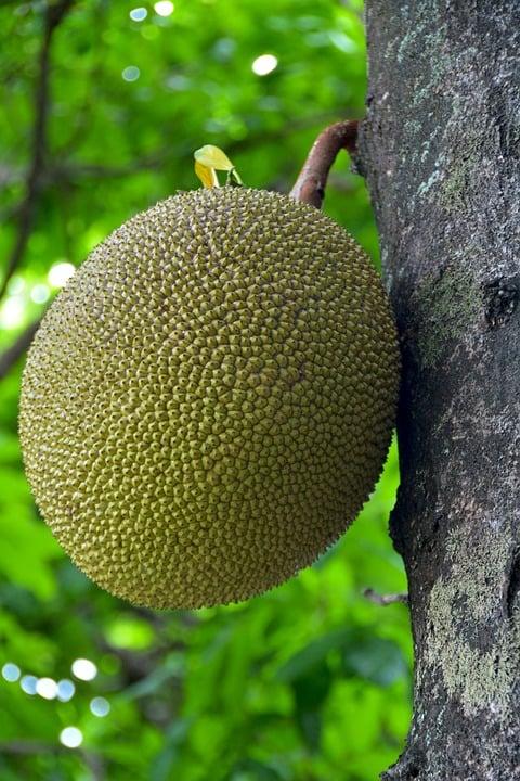 frutta-jack
