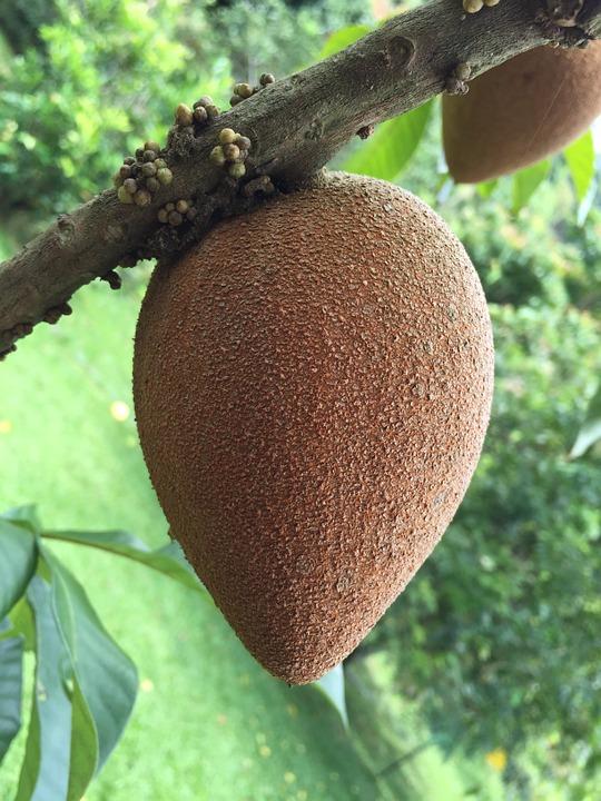 Galleria foto - Frutti esotici tropicali Foto 17