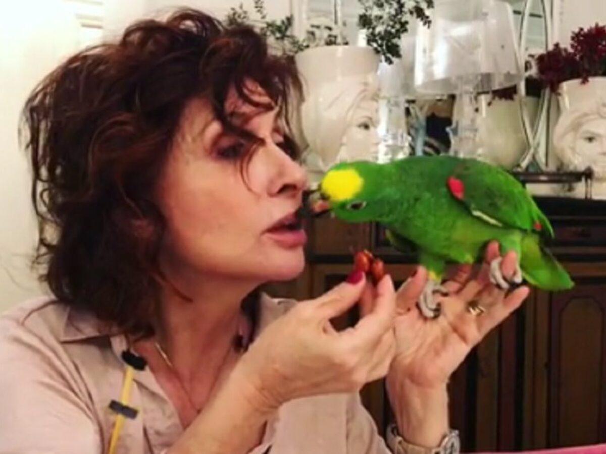 d'eusanio pappagallo2